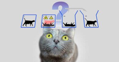 Schrödingers samtykke